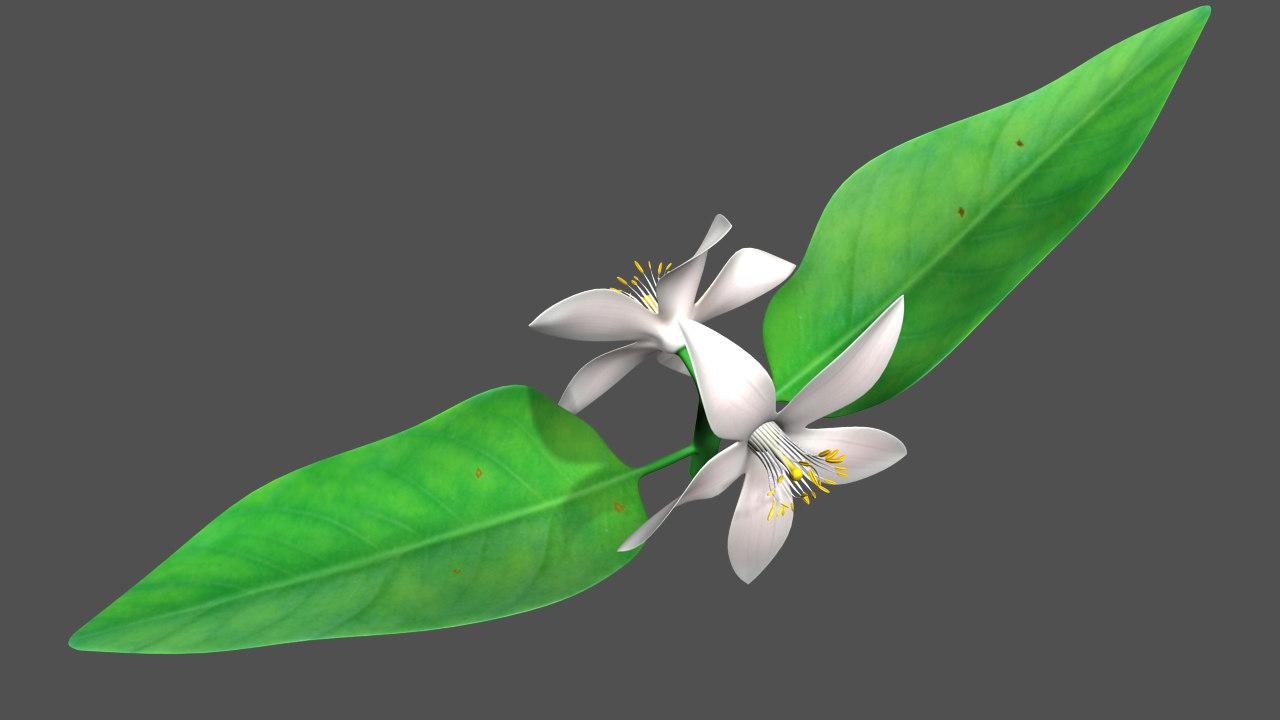 citrus flowering obj