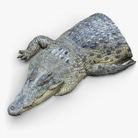 3d crocodile fragment scan