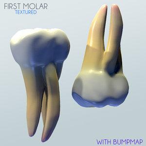 3ds max molar human