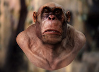 Apeman bust