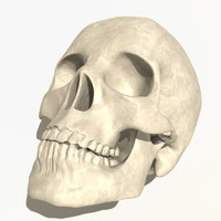 anatomical human skull 3d 3ds