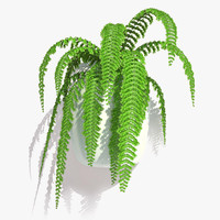 nephrolepis plant hanging pot 3d max