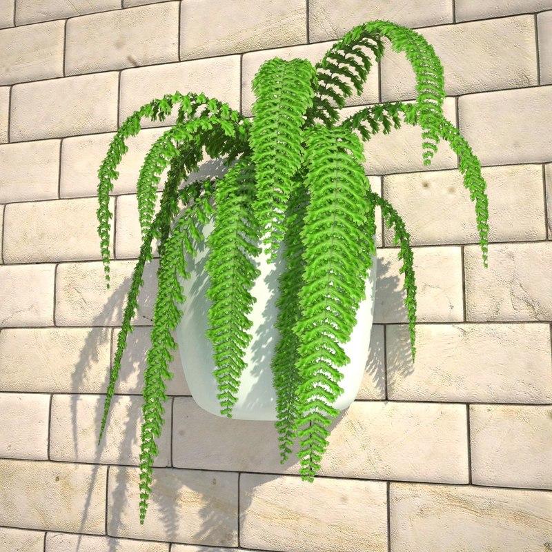 nephrolepis plant hanging pot 3d max