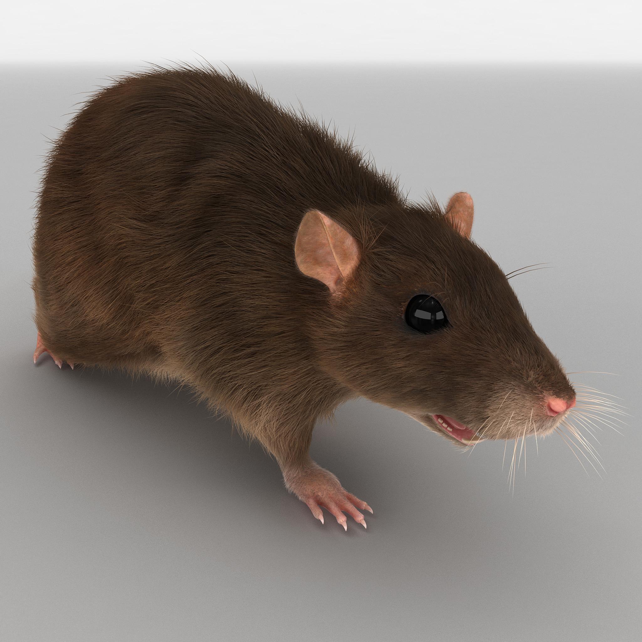 rat pose 4 fur 3d model