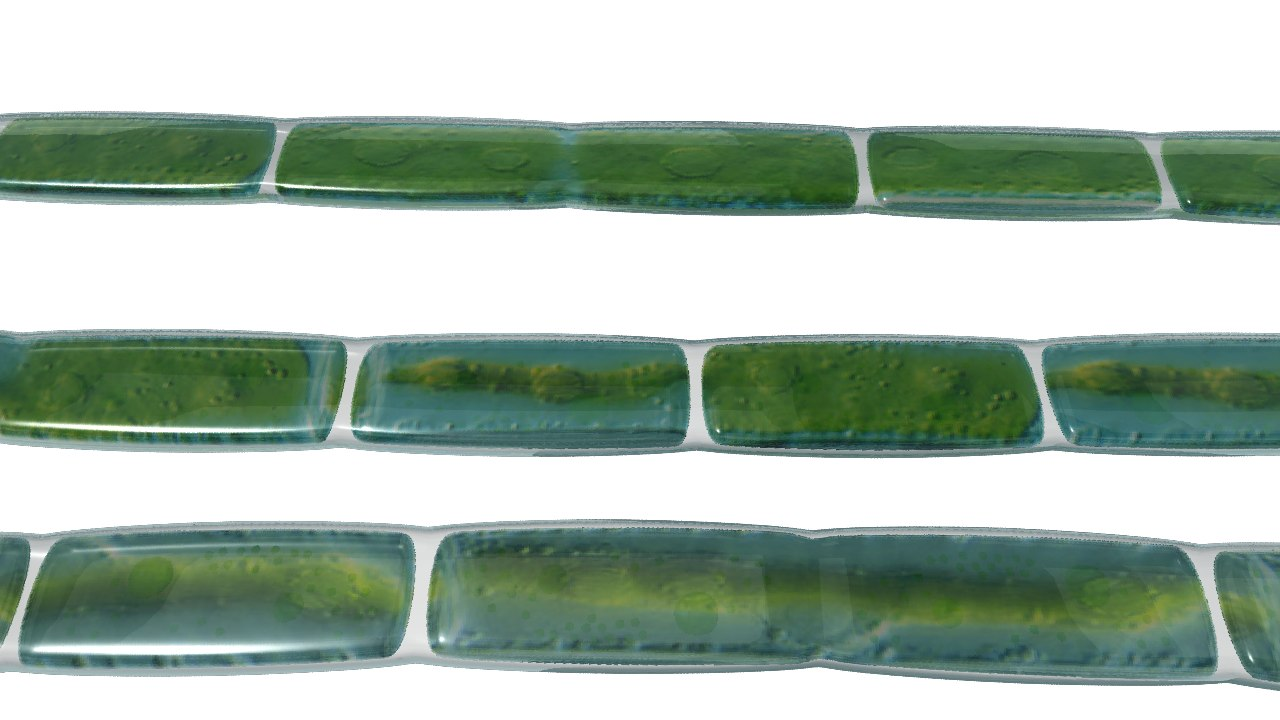 green chloroplast 3d model