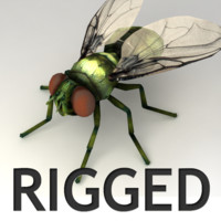 3d fly rigged biped
