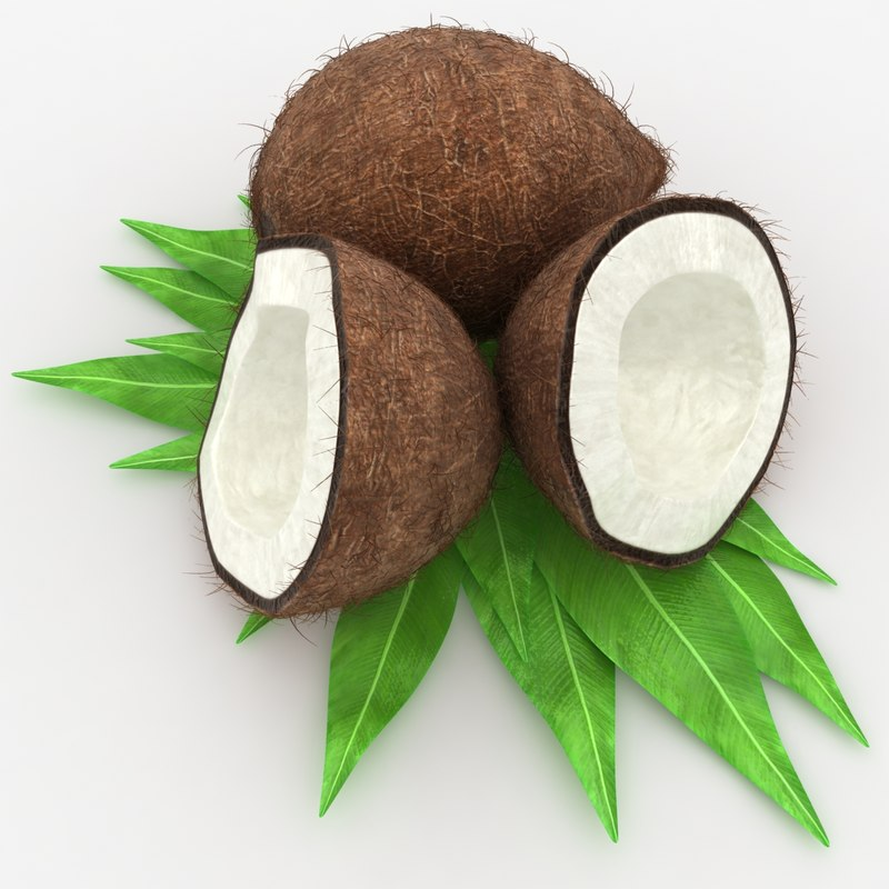 realistic coconut hair 3d model