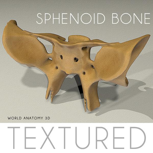 3d anatomy sphenoid bone