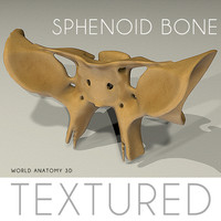 Anatomy Sphenoid Bone