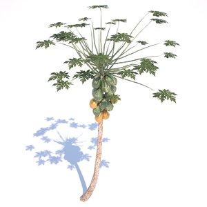 papaya tree 3d 3ds