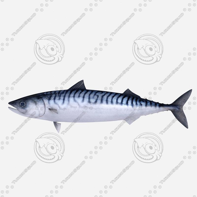 atlantic mackerel 3d obj