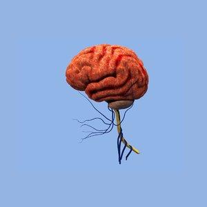 brain 3ds