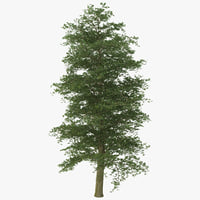 european beech tree 3ds