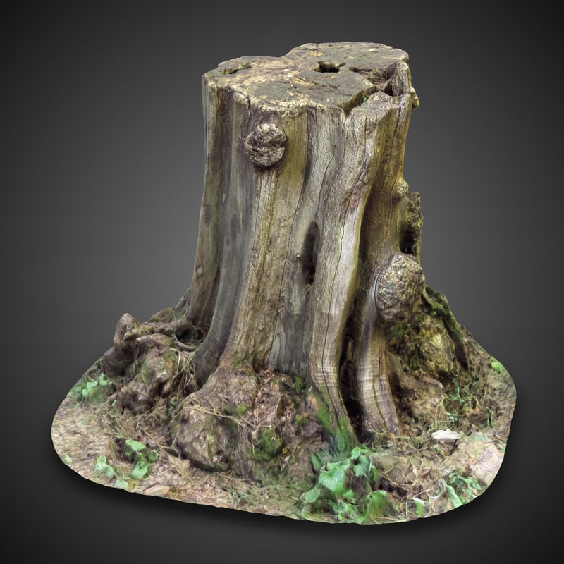 tree stump 1 3d model
