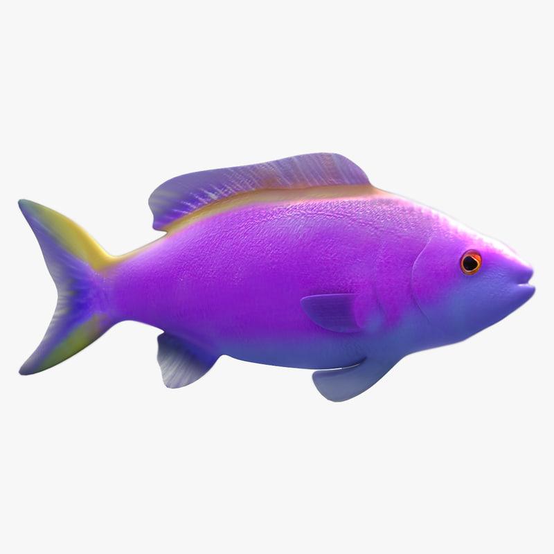 purple queen fish 3d model