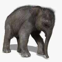 photorealistic baby elephant rigged 3d model