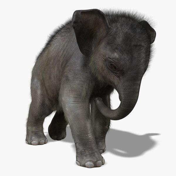 maya photorealistic baby elephant animation
