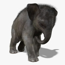 Asian Elephant 3D models