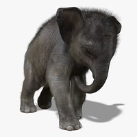 Baby Elephant (ANIMATED) (FUR)
