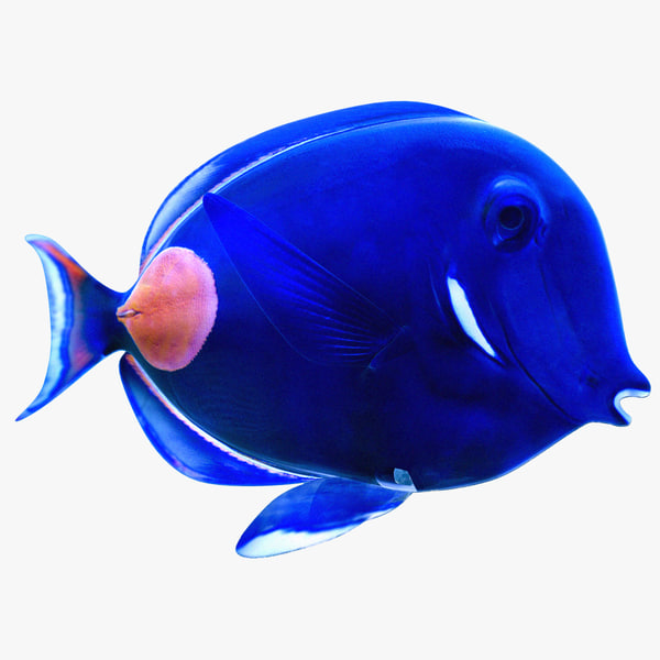 3ds max achilles tang tropical fish