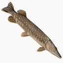 pike fish 3D models