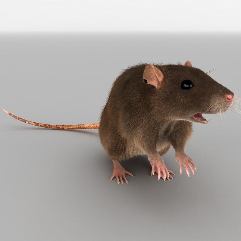 3d rat pose 2 fur model