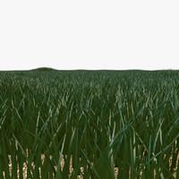 grass 3d c4d