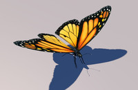 monarch butterfly animation 3d model