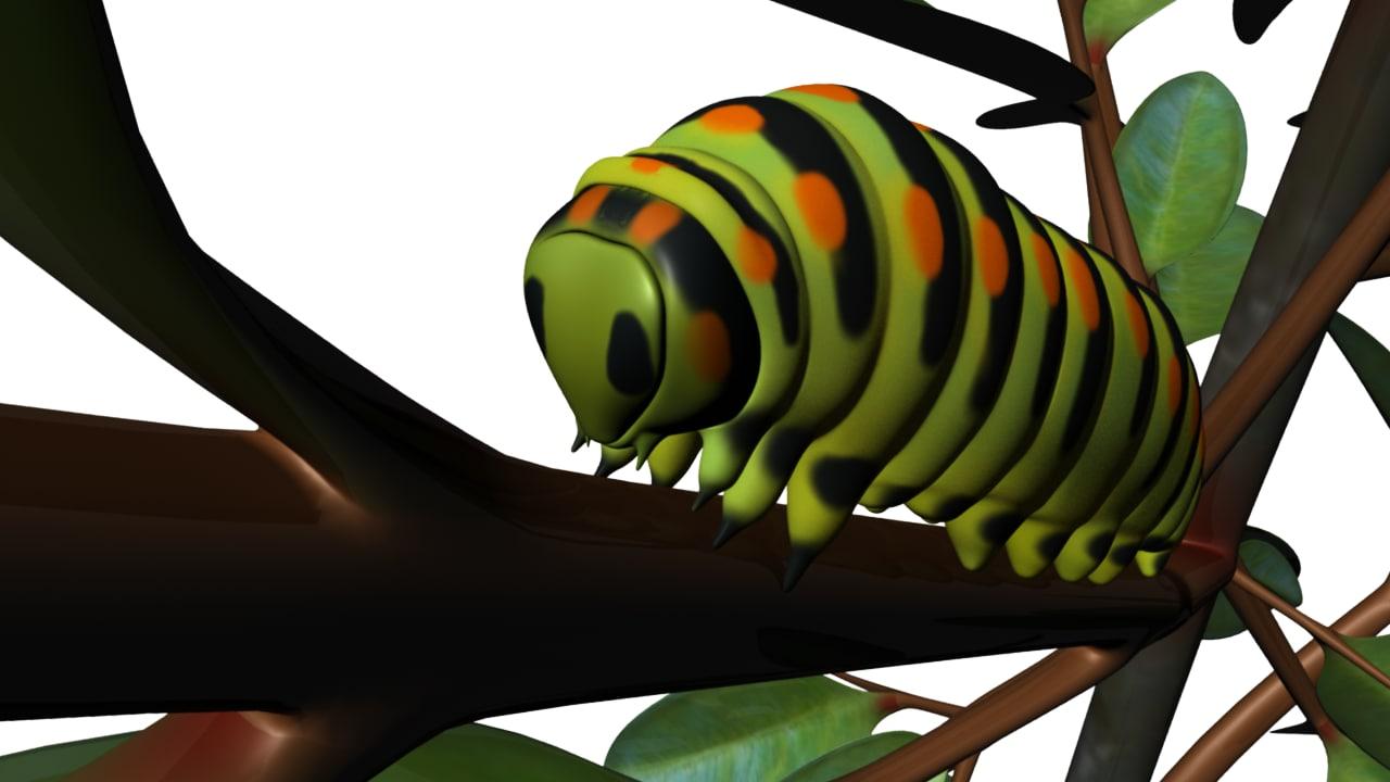 3d caterpillars insect