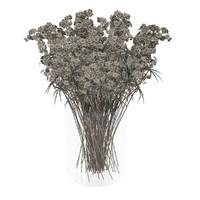 dry flowers max