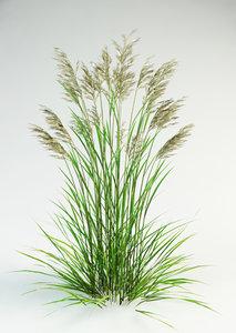 3d max fescue grass