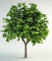 horse-chestnut conker tree 3d model