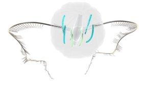 ctenophor animals marine 3d obj