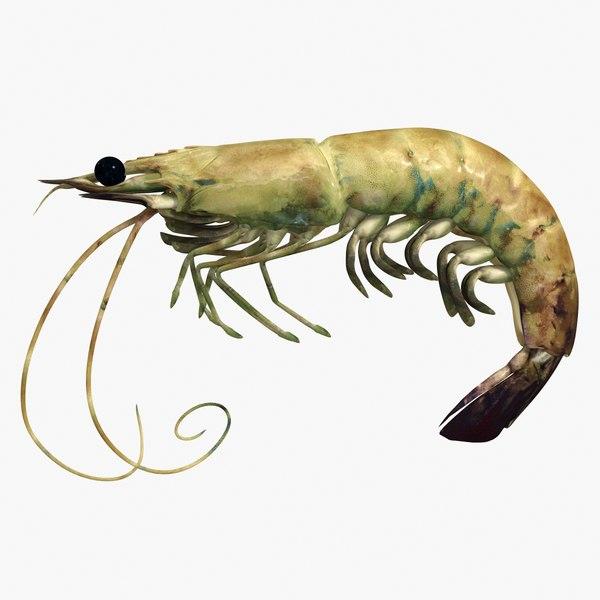 shrimp 2 3d 3ds