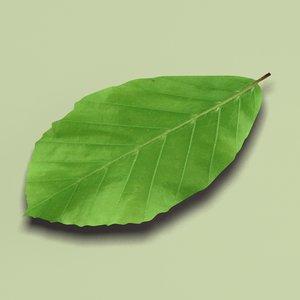3ds common beech fagus sylvatica