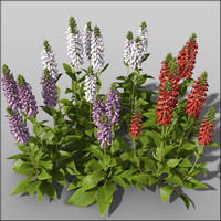 Foxgloves Bundle