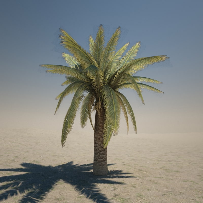 3d obj palm tree
