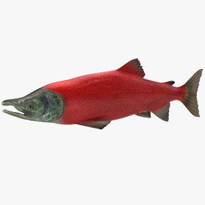 sockeye salmon fish obj