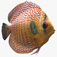 3d generic discus tropical fish
