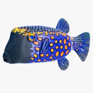 blue boxfish tropical fish 3d model