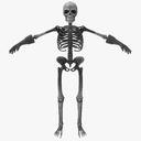 cartoon skeleton 3D models