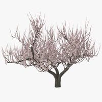 3ds max apricot tree bloom