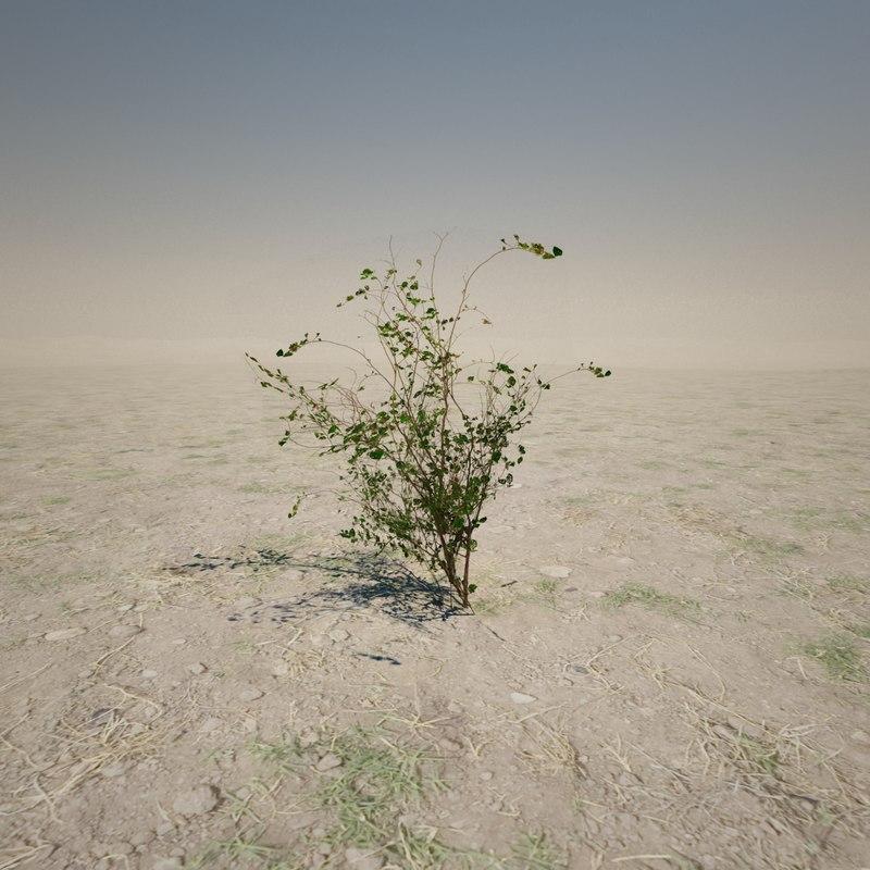 3d small desert plant
