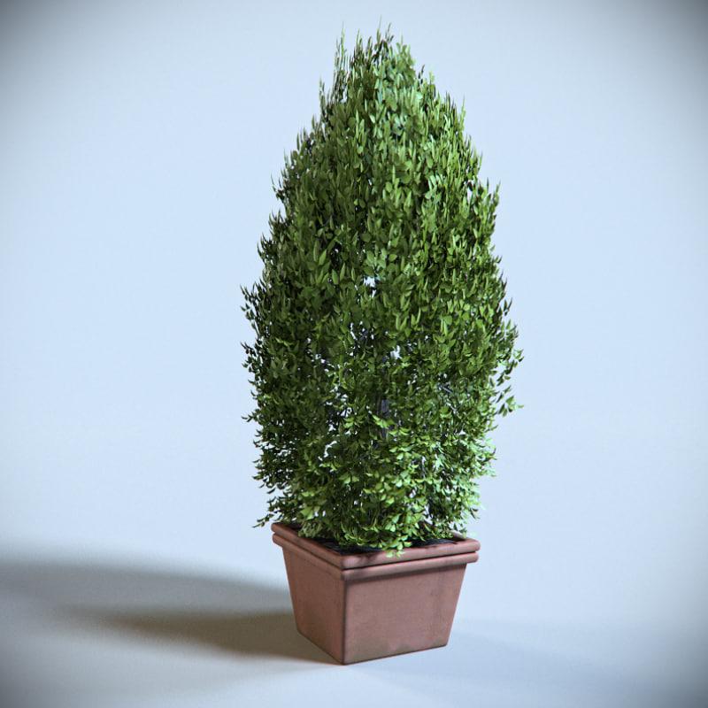 decoration shrub 3d max