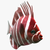 3ds max red nose fish