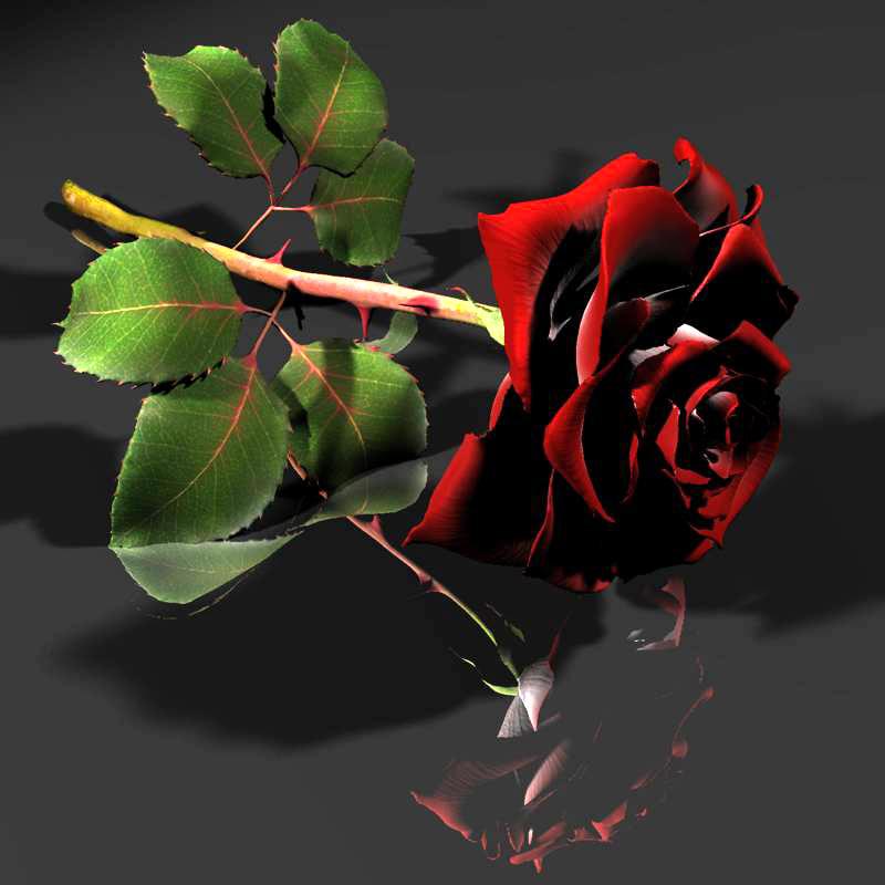 3d model of red white rose