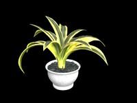 3d plants agave