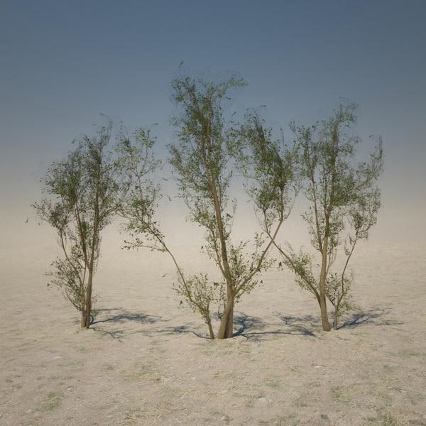 desert tree 3d max