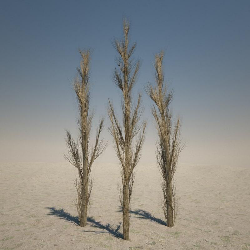 dead cypress tree max