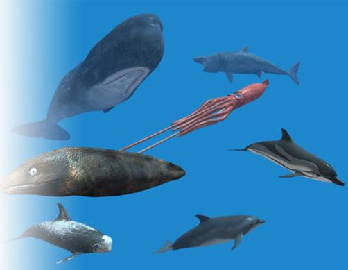 3d rigged sea animals